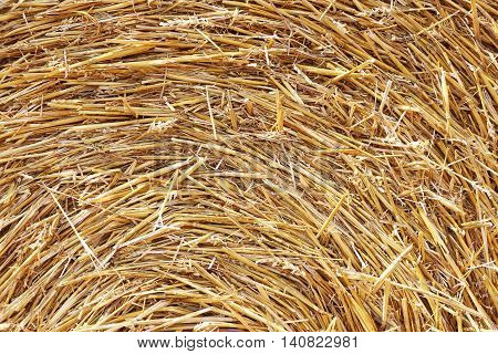 The haystack texture background in the sunlight