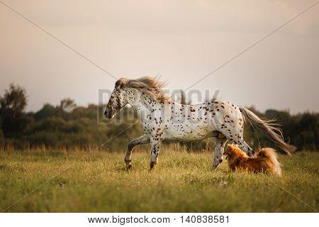 White spot in the horse runs gallop