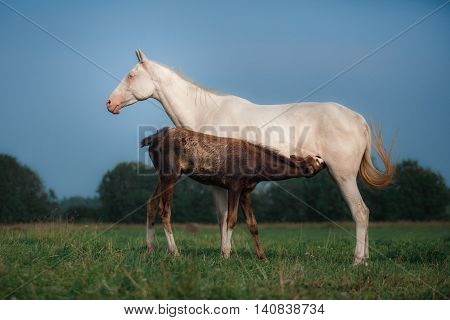 Mare and foal in the field outdoors
