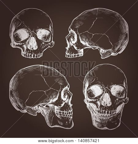 Drawing Of Human Skulls On Chalkboard In Sketch Style