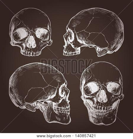 Drawing Of Human Skulls On Chalkboard In Sketch Style