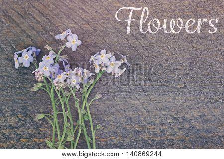 Vintage floral card. Forget-me-nots flowers on wooden background