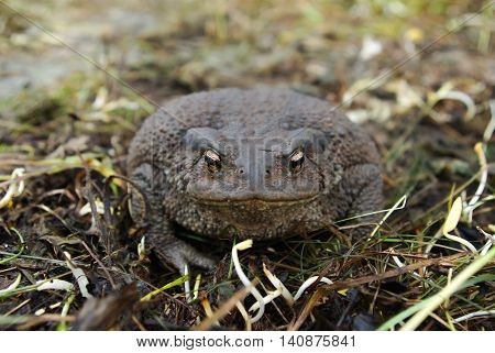 Toad sitting on the ground during the day