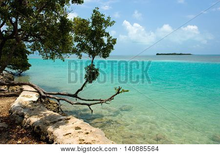 Mangrove growing on the seaside of one of the Florida Keys
