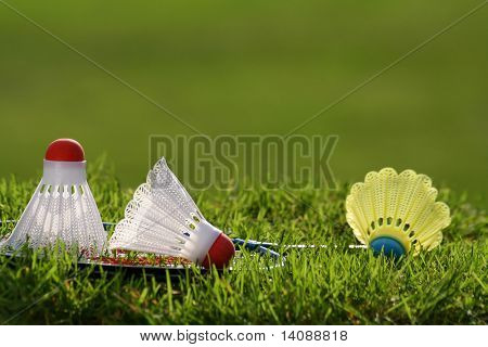 Badminton racket with shuttlecocks in the grass