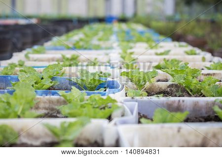 Recycle Of Plastic Bucket Used In Organic Vegetable Farm