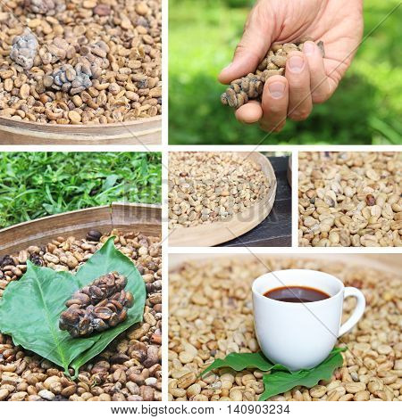 collage of coffee luwak beans with basket and white cup of coffee