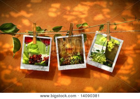 Pictures pinned on clothesline with reflection of summer leaves