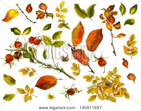 Watercolor set with gold and red leaves, rosehip berries and twigs isolated on white background