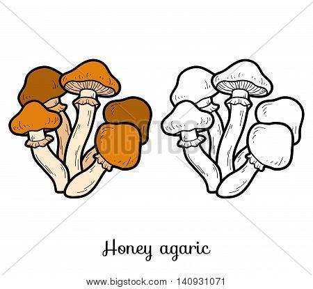Coloring Book. Edible Mushrooms, Honey Agaric