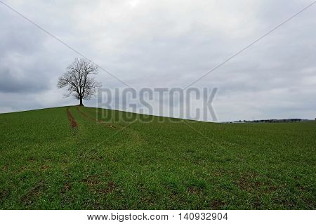 Old and lonely tree in a landscape with overcast skies