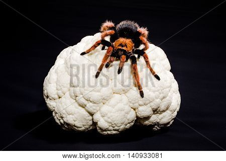 Close-up of metaphoric representation of brain cancer, of dementia, depression, schizophrenia. Tarantula on a cauliflower. Black background.