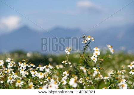 white flowers (Forest of Flowers )