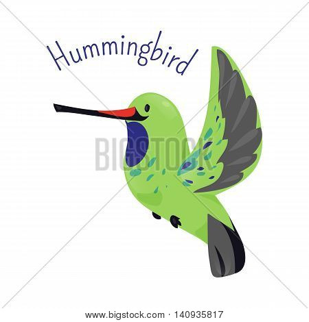 Hummingbird isolated on white background. Family Trochilidae Golden tailed sapphire. Child fun pattern icon. Part of series of various bird species. Fauna. Wildlife concept. Cartoon style. Vector
