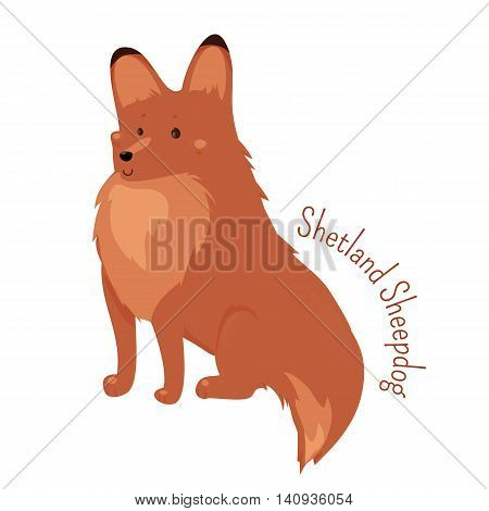Shetland Sheepdog isolated. Sheltie. Rough Collie. Breed of herding dog. Small, double coated, working dog, agile and sturdy. Part of series of cartoon puppy species. Child fun pattern icon. Vector