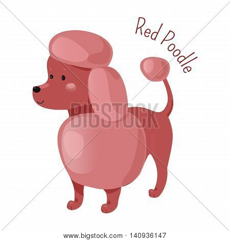 Red poodle isolated. Four sizes of breed standard, medium, miniature, toy. Active, intelligent and elegant dog, squarely built. Part of series of cartoon puppy species. Child fun pattern icon. Vector