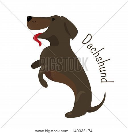 Dachshund isolated. Short-legged, long-bodied, hound-type dog breed. Coat varieties smooth, longhaired, and wirehaired. Part of series of cartoon puppy species. Child fun pattern icon. Vector