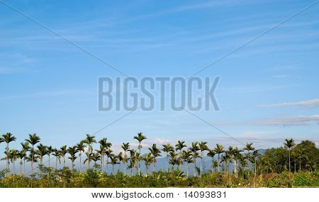 tropics tree landscape with sky
