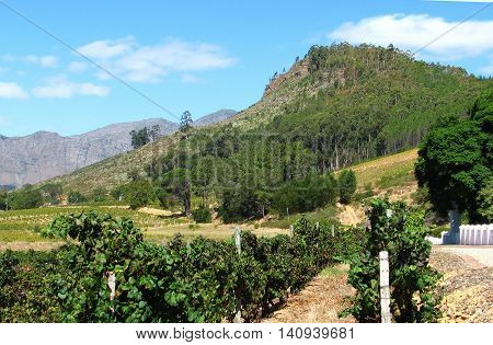 Grape Farm, Franchhoek Western Cape South Africa