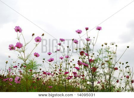 flower(Forest of Flowers)