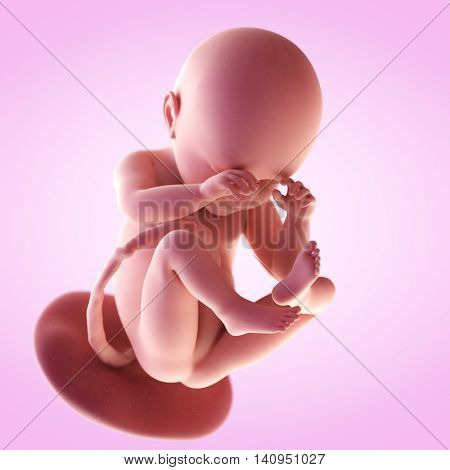3d rendered medically accurate illustration of a fetus in week 38