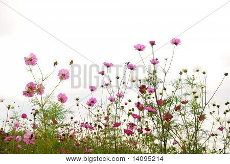 red flowers (Forest of Flowers)