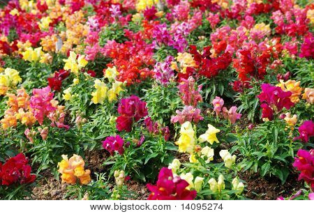 flower (Forest of Flowers)