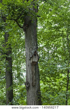 Nesting Box On A Tree