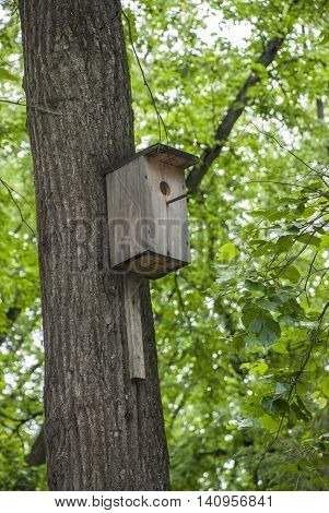 The self-made nesting box on a tree in the summer wood
