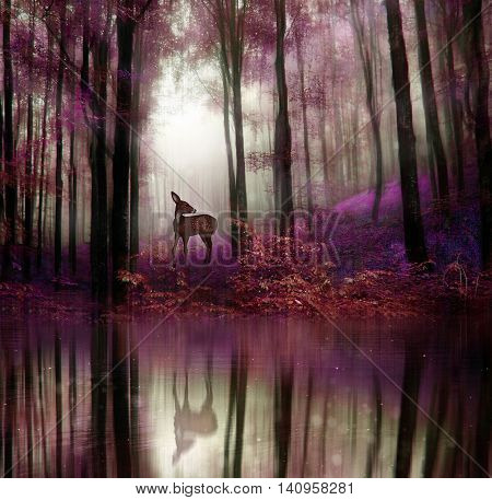 A little fawn in middle of a forest with water reflection