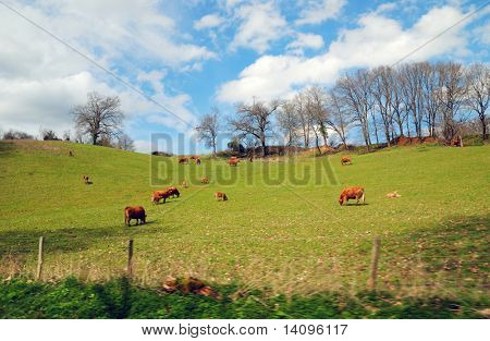 A view of the Limousin in france