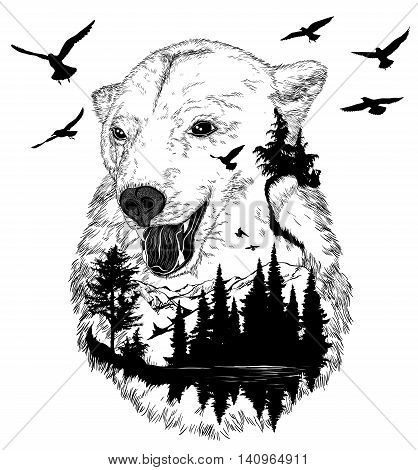 Hand drawn bear portrait for your design wildlife concept