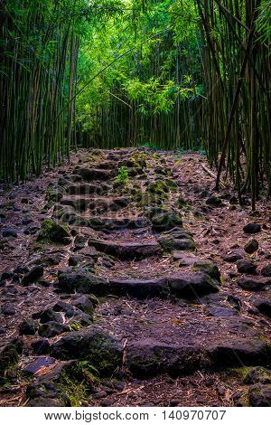 Landscape View Of Bamboo Forest And Rugged Path, Maui