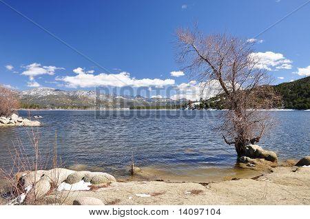 Barren lakeshore tree