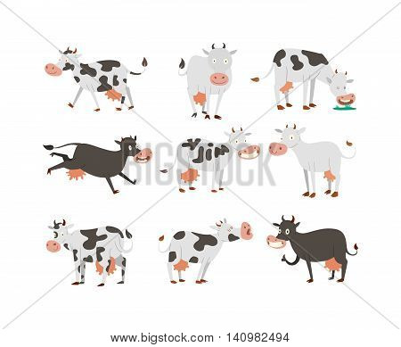 Milk cow bull with calf bull buffalo. Different cows colors dairy farm beef, nature domestic farm animals. Cartoon cows action set, with cute lovely heifer different in different poses vector.