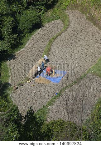 Ha Giang, Vietnam - Oct 15, 2015: Vietnamese minority people harvesting rice on terraced paddy field on a hill under the yellow sunlight of autumn in Hoang Su Phi district, north of Vietnam.
