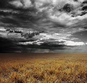 foto of rain cloud  - Storm clouds with rain over meadow with yellow grass - JPG