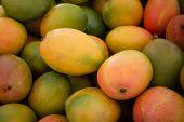 Mangoes Background - Mango Fruit poster