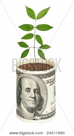 Sapling Growing From Dollar Bill