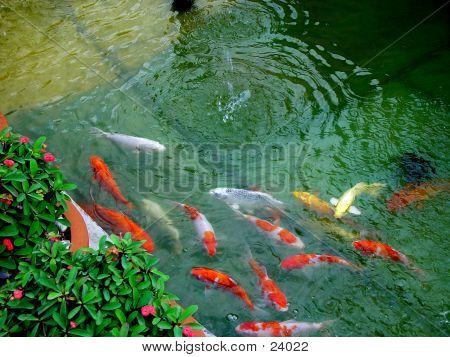 Karpa Fish