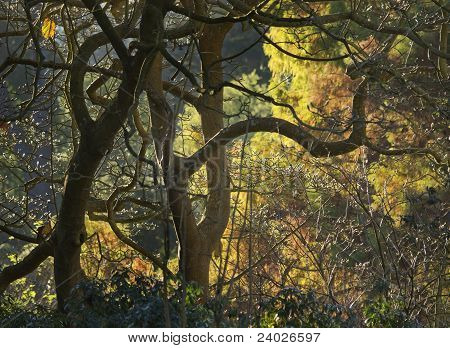 Tangle of Trees in Fall Color