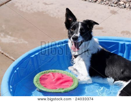 Pup in a Pool