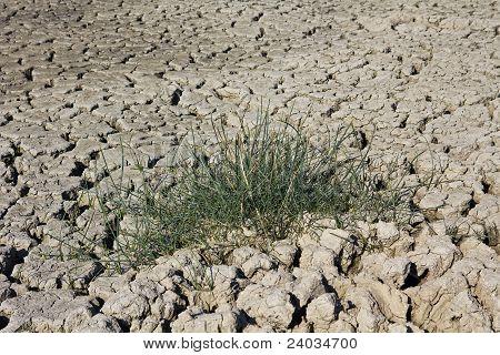 Grass On Dry Soil