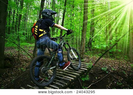 bicyclist in wood