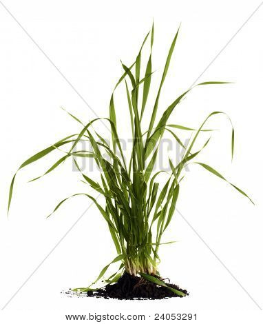 Green grass with ground on white background