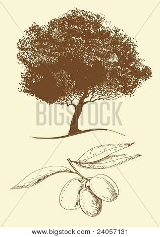 Vector Olive oil (tree, branch)