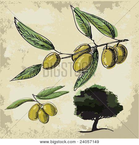 Vector Olive oil (tree, branch)
