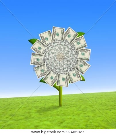 Dollar Flower