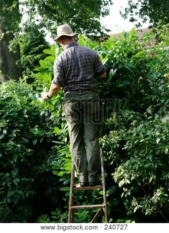 Gardener Up Ladder