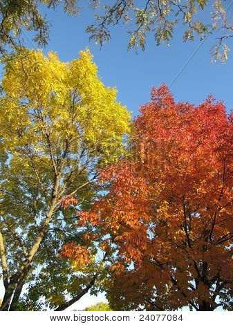 Colorful leaves of fall showing beautiful orange and yellow color